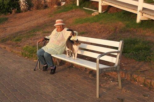 Дама и кот на скамейке