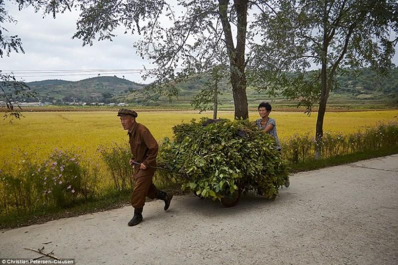 «Но это вовсе не значит, что Северная Корея превратилась в райский уголок, где у всех жизнь роскошна
