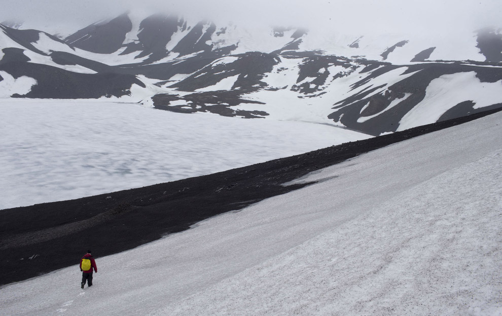 9. Пингвиньи следы, Антарктида, 26 января 2015. (Фото Natacha Pisarenko | AP):