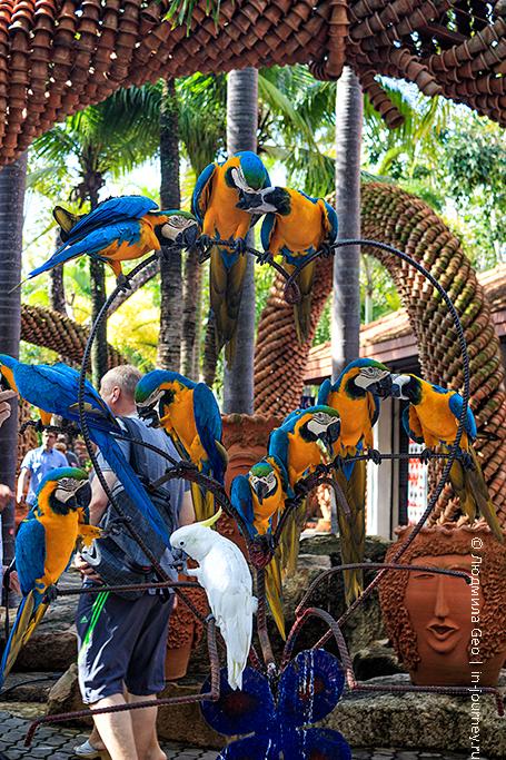 парк нонг нуч попугаи
