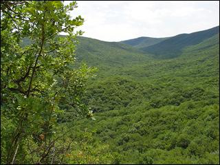 Старокрымский лес