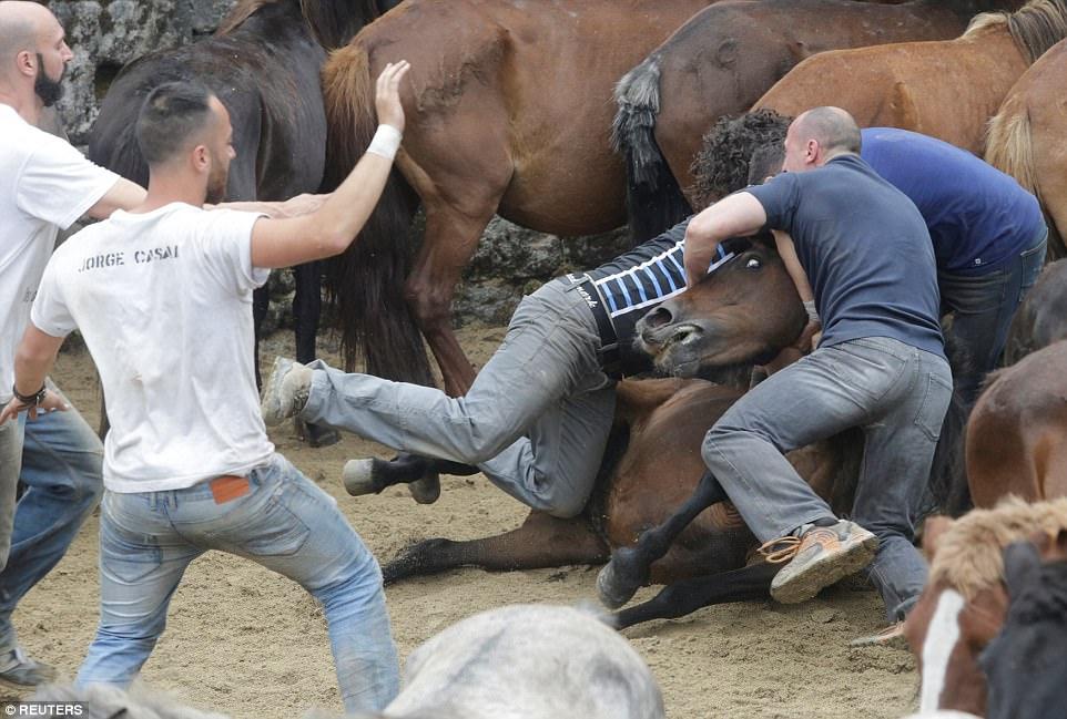 Фестиваль Rapa das Bestas: смешались в кучу кони, люди