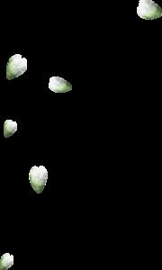 россыпи лепестков
