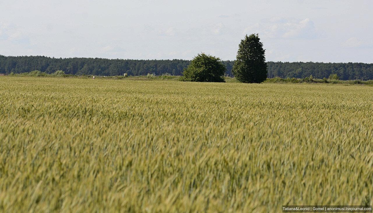 Моя синеокая Беларусь