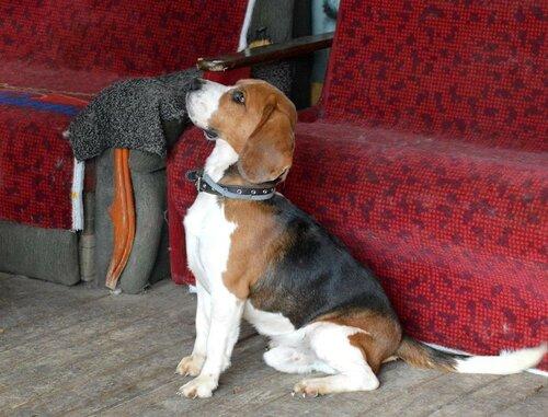 Семен собака из приюта москва