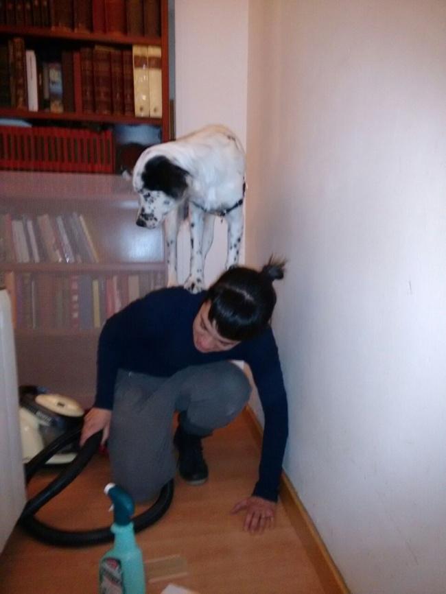© imgur   «Котята, явас боюсь!»