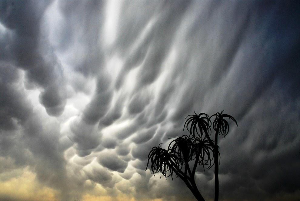 В США появление Mammatus раньше связывали с появлением торнадо в ансамбле кучево-дождевых ячеек
