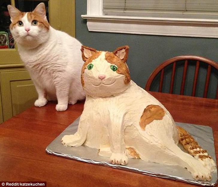 Так и кота обидеть можно.