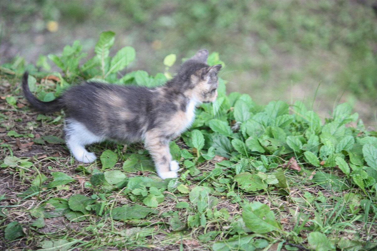 Котики-41.jpg