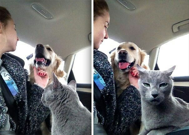 Коты, заслуживающие Оскар