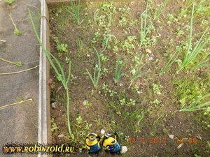 лук и сорняк