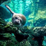 животное в воде