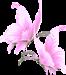 Бабочки розовые.png