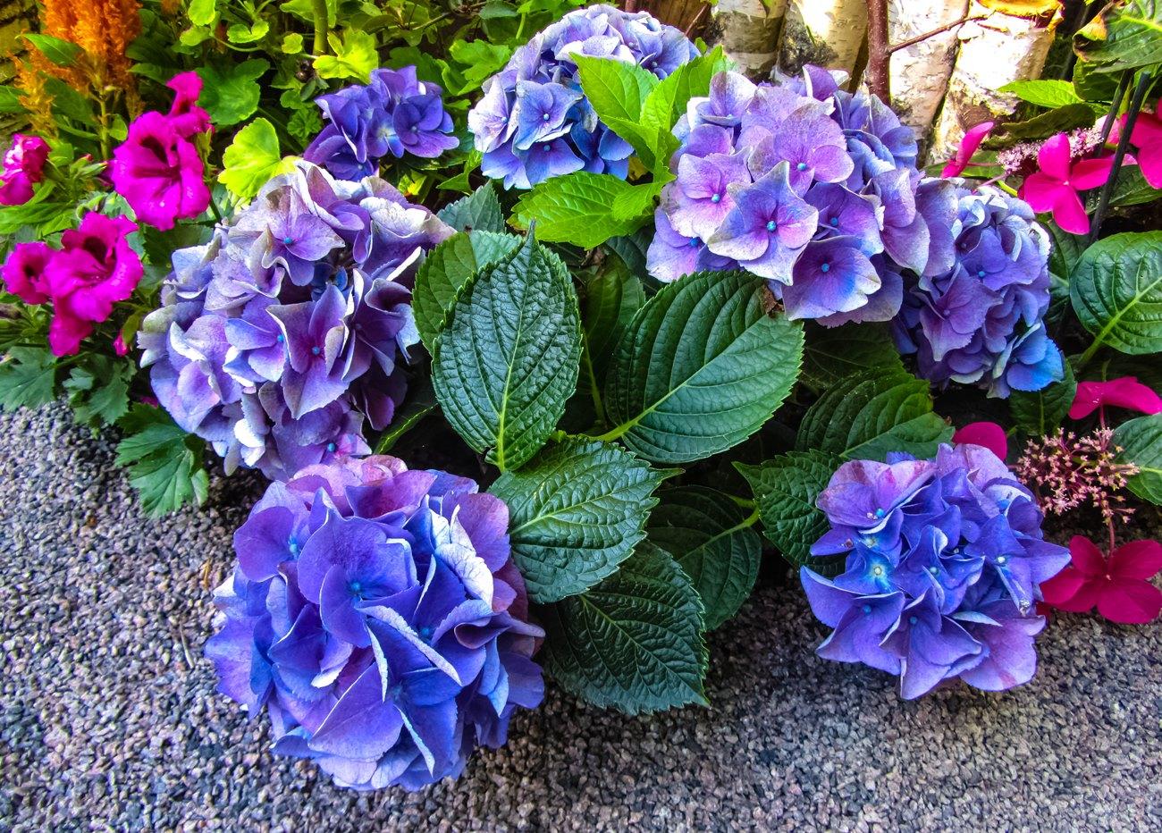 irina-fortuna-moscow-flowers 02.jpg