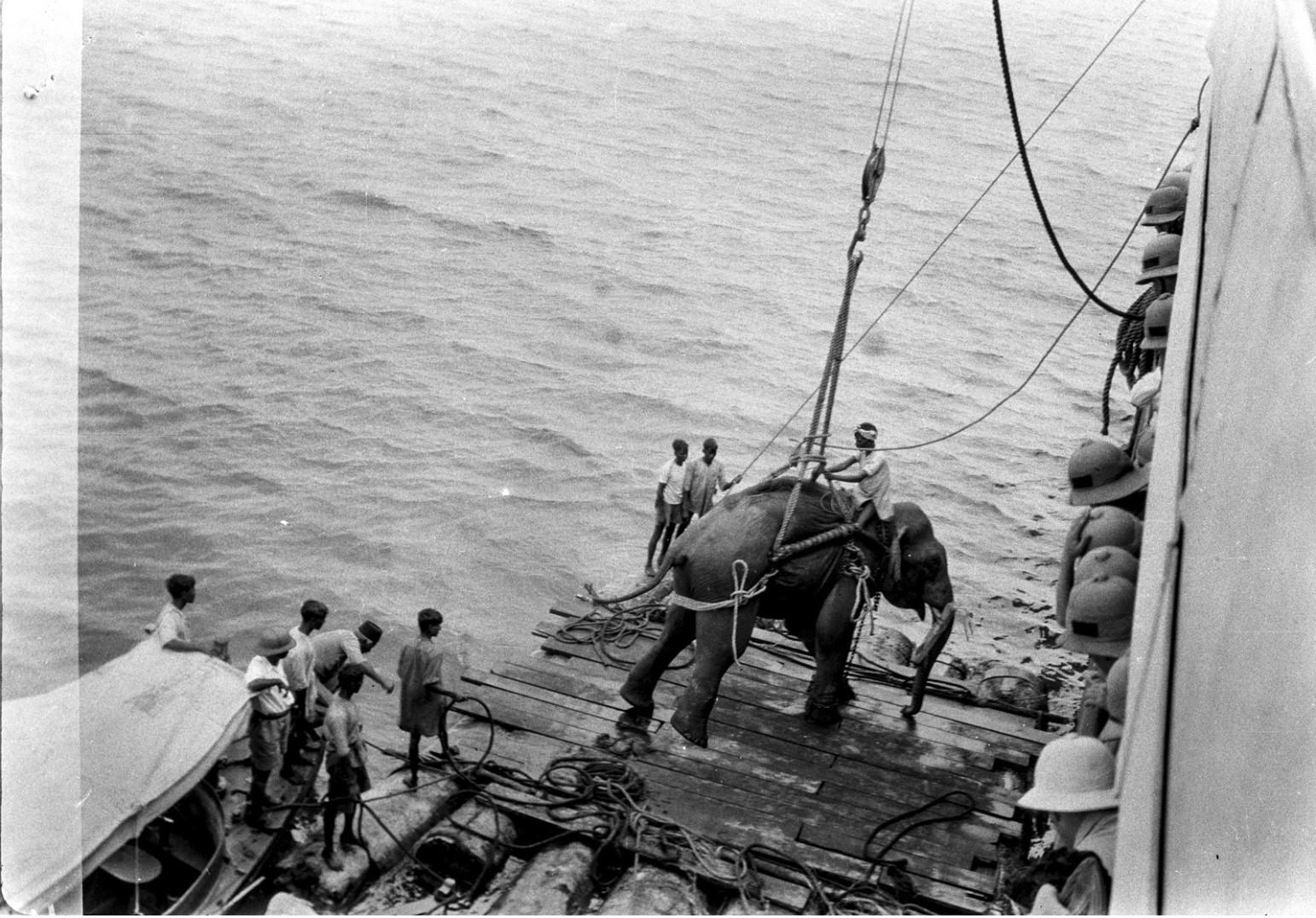 1118. Погрузка слонов