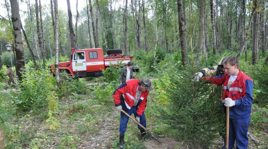В Губернском парке Калуги высадили более 300 саженцев ели