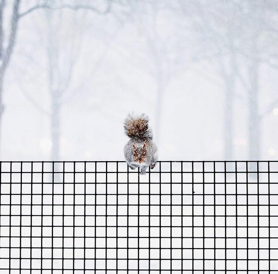 Подборка интересных и веселых картинок 07.01.18