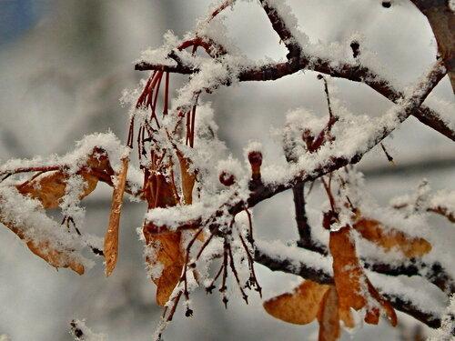 Пушисто-снежное