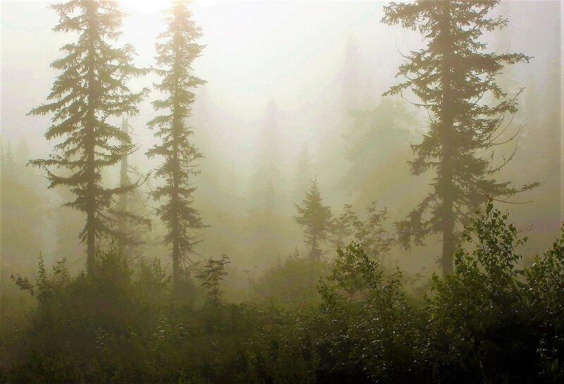 IMG_6877.JPG Сырой туман