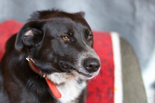 Дживс собака из приюта догпорт