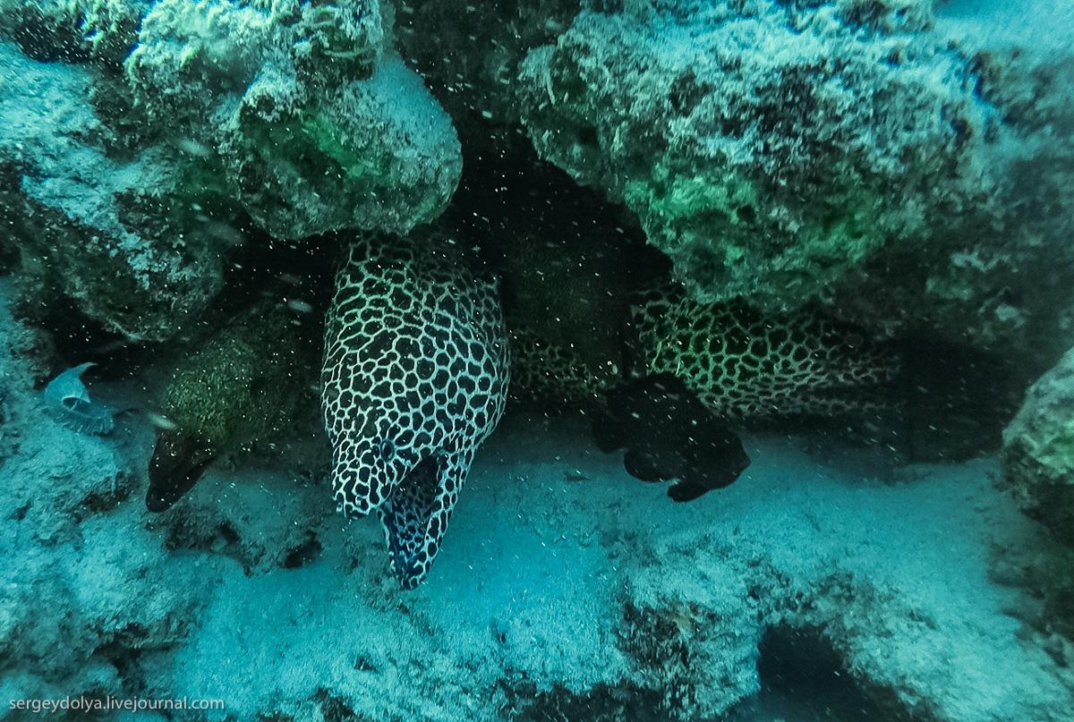 Черные мурены похожи на доисторических подводных монстров: