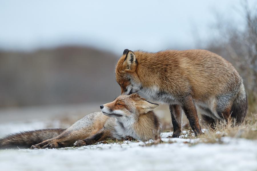 Очарование без границ — подборка животных, которые обнимаются