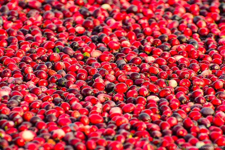Вообще, это — одна из самых питательных ягод, богатая витамином С, калием и железом, органическими к