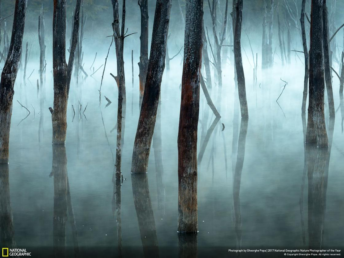 © GHEORGHE POPA / National Geographic Your Shot
