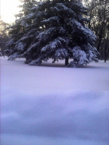Снежная целина
