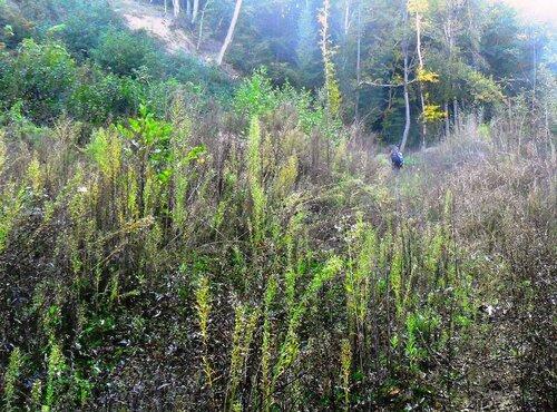Тропами лесными, к бардам ... SAM_4085.JPG