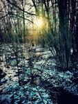 Январское солнце