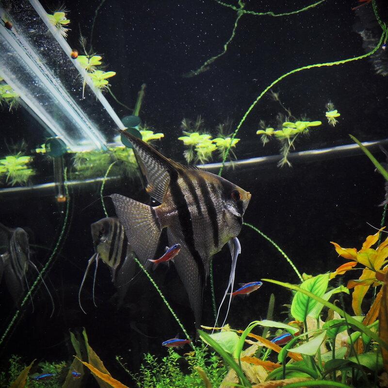 Подводный мир в комнате