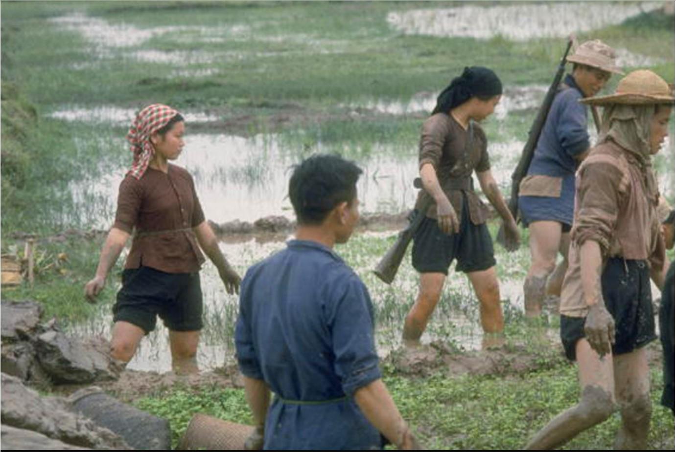 Группа сельскохозяйственных рабочих с винтовками за плечами в рисовом поле