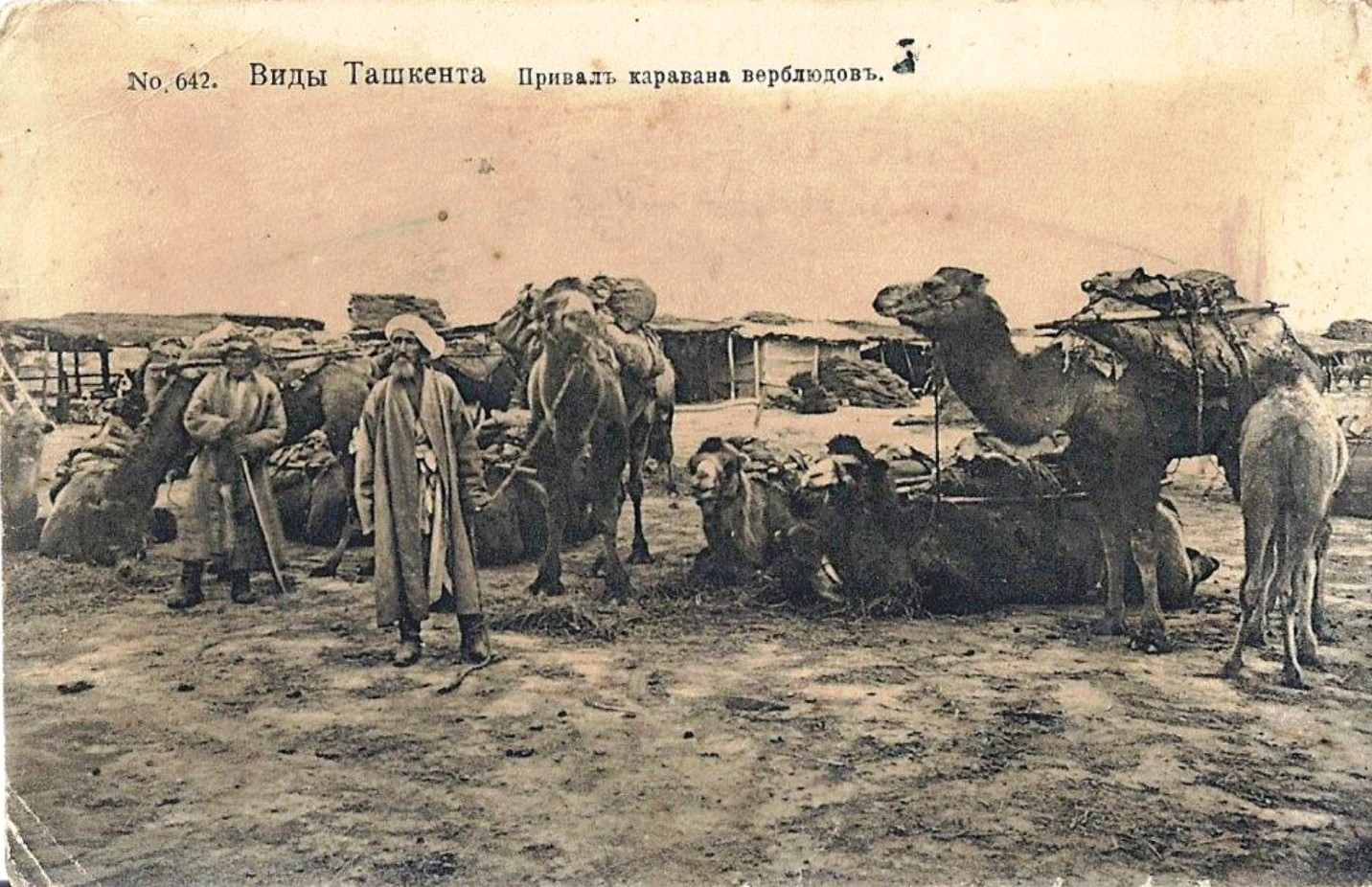 Окрестности Ташкента. Привал каравана верблюдов