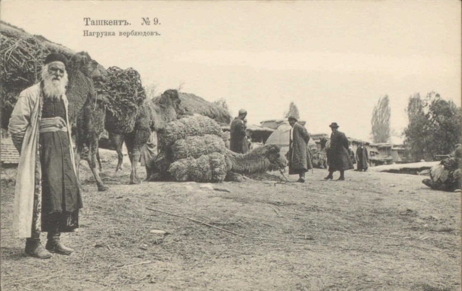 Окрестности Ташкента. Нагрузка верблюдов