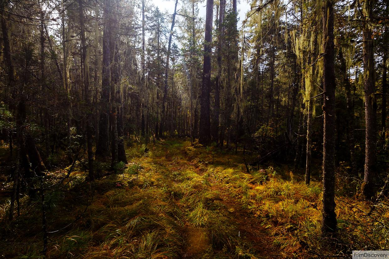 Шла через лес и наткнулась на член