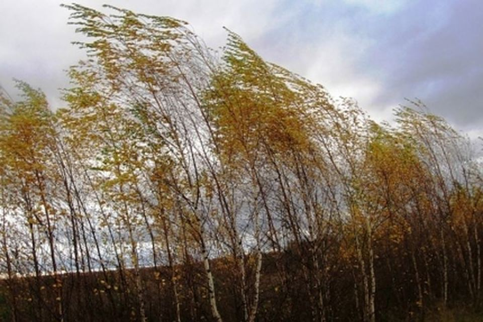 МЧС Новосибирска предупредило жителей ошквалистом ветре 21сентября
