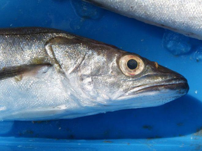 Не обольщайтесь, это ненадолго: общее впечатление изменится как только рыба откроет рот