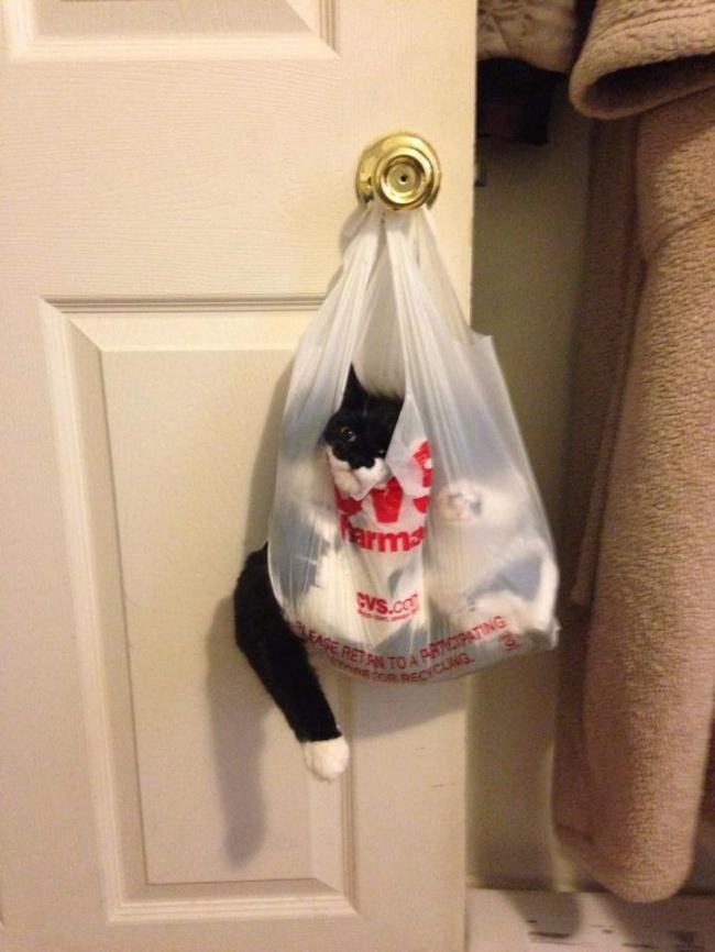 © reddit.com      Когда твой кот всю ночь орал, инаэтот раз все-таки вызвал демо