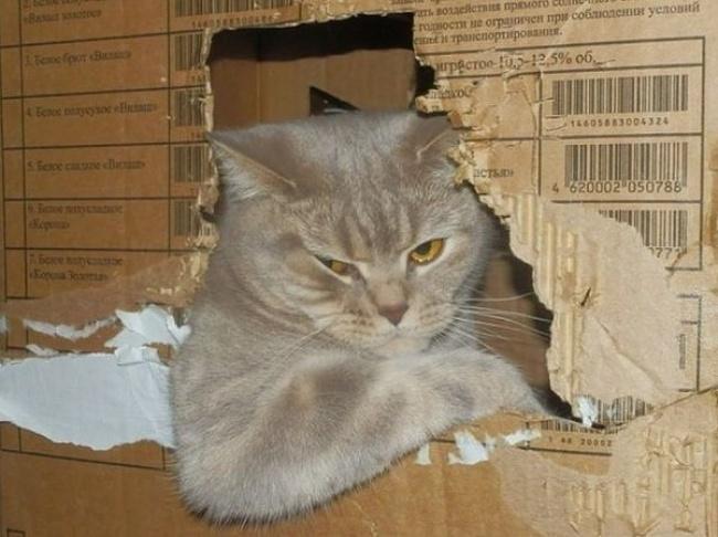 © pikabu.ru      Эта кошка затмила своим обаянием всех восточных красавиц