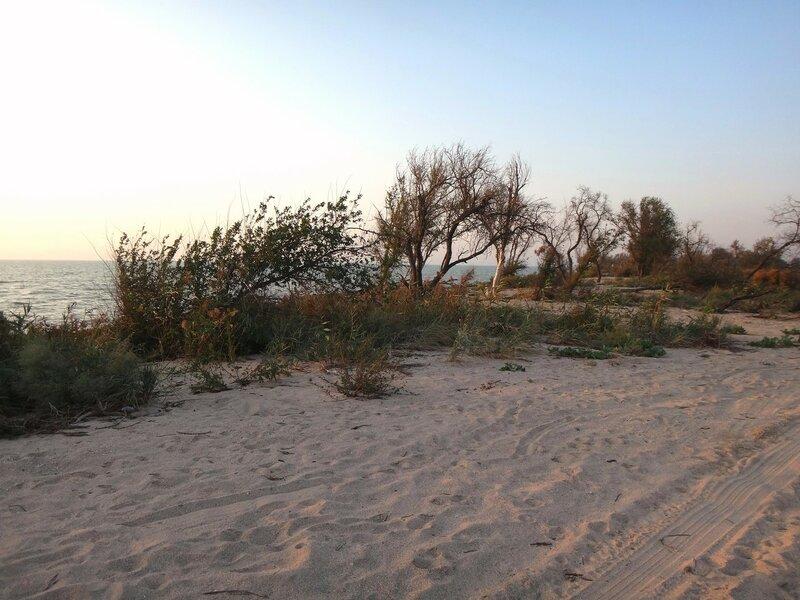На песках...  В дороге... к дому устремленье ...   45. Фото из велокольца. Ахтари-Староминская-Бейсугский пролив (64).JPG