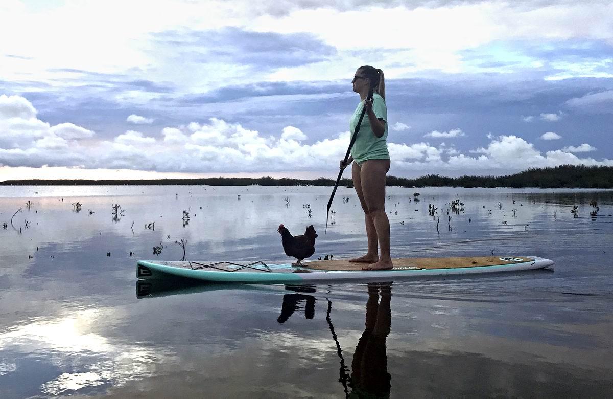 Навстречу новым приключениям!: Водоплавающая курочка Ряба и ее хозяйка