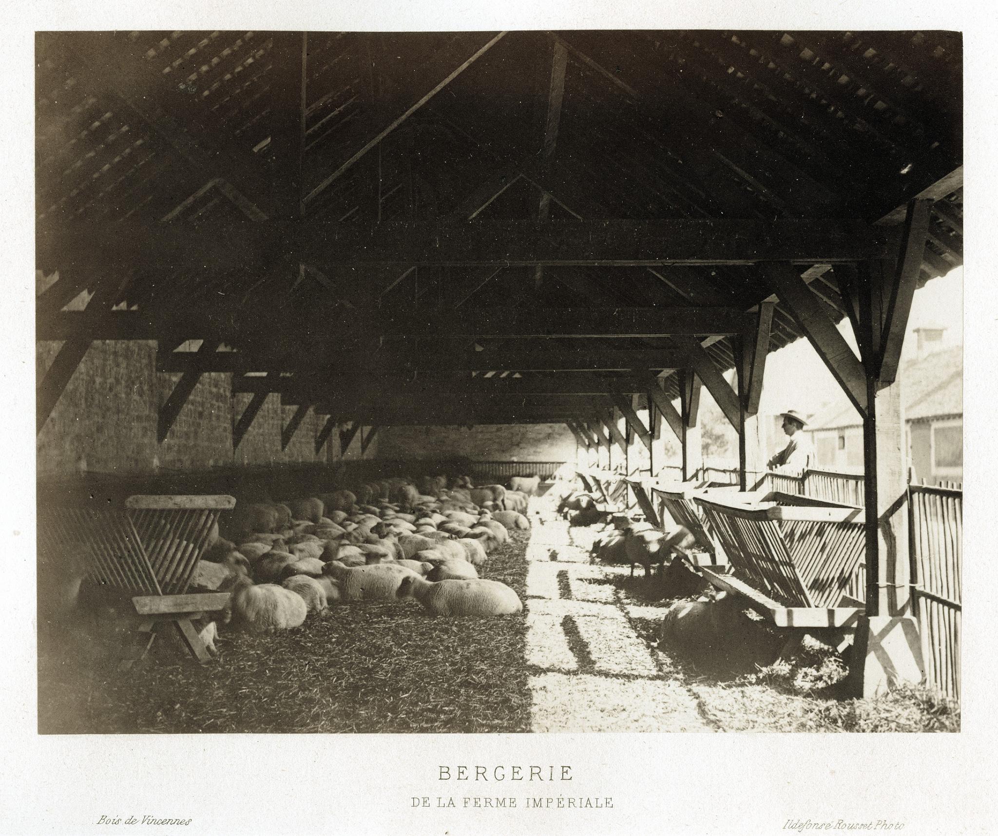 Овчарня на императорской ферме