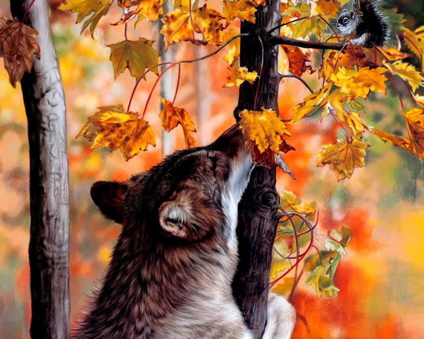 Волки картинка
