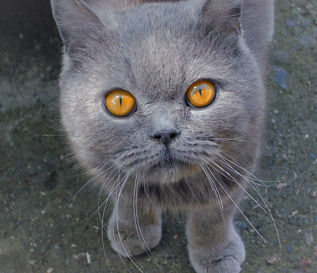 Разве эти глаза могут лгать?!!