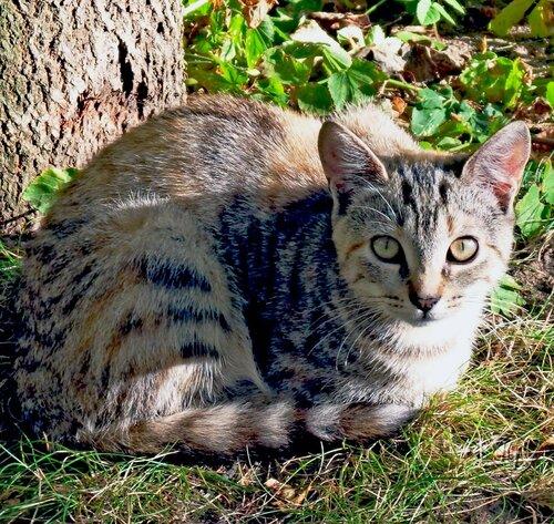 Стайка кошек