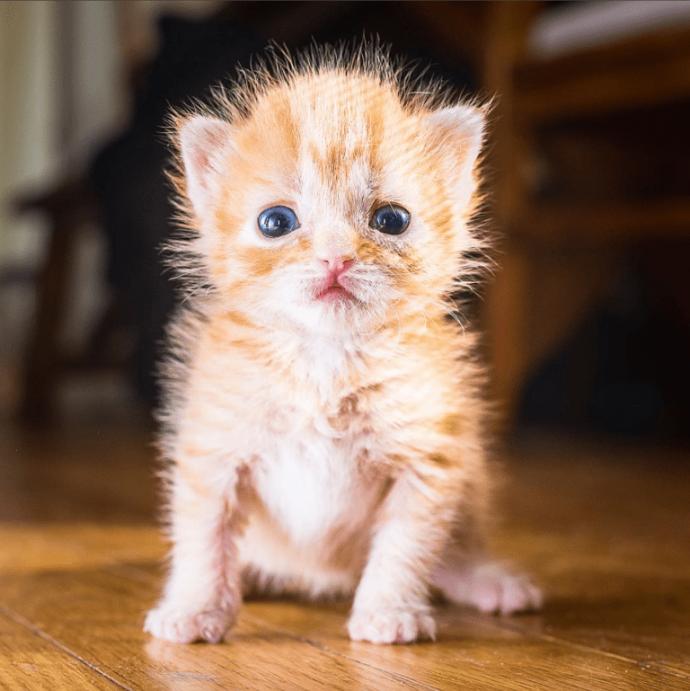 котенка нашли в коробке история фото