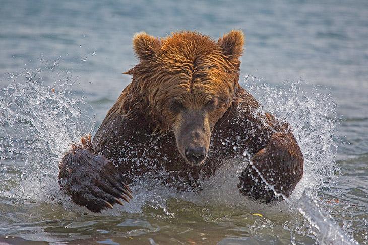 Камчатка. Земля медведей (33 фото)