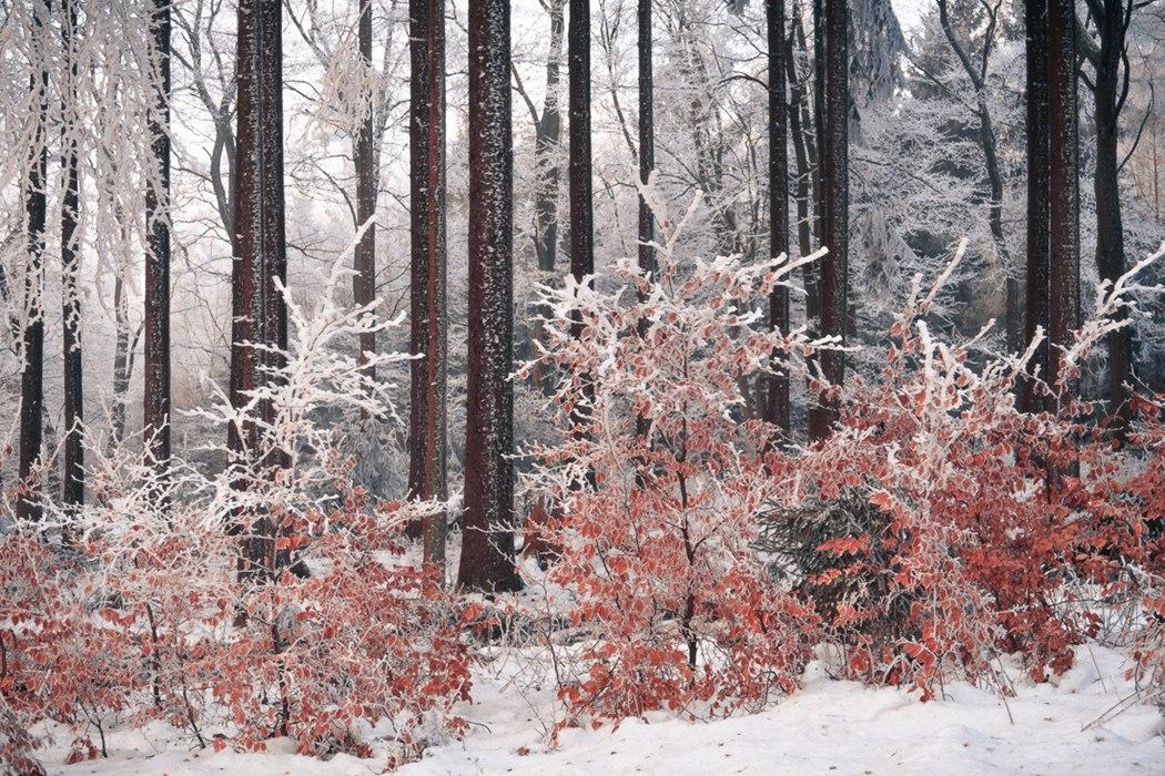 природа Фотография фотограф Германия лес