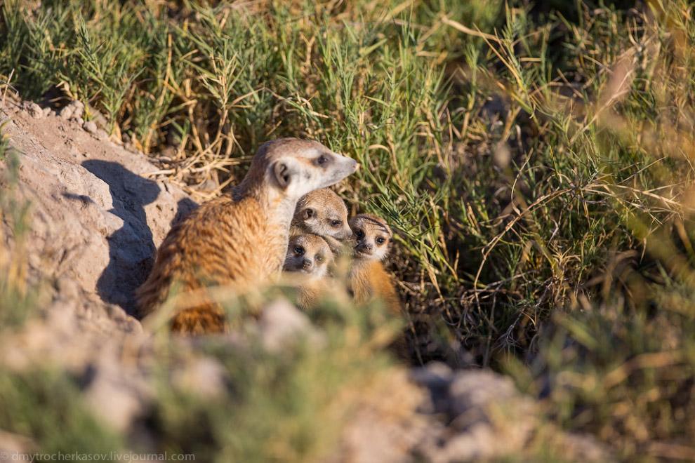 Африка животные самые необычные необычные животные котик Котики поэты разница